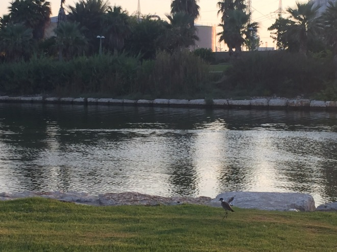 Waterfowl on the Yarkon River Bank