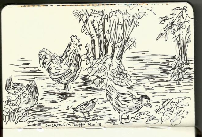 Chickens in Jaffa