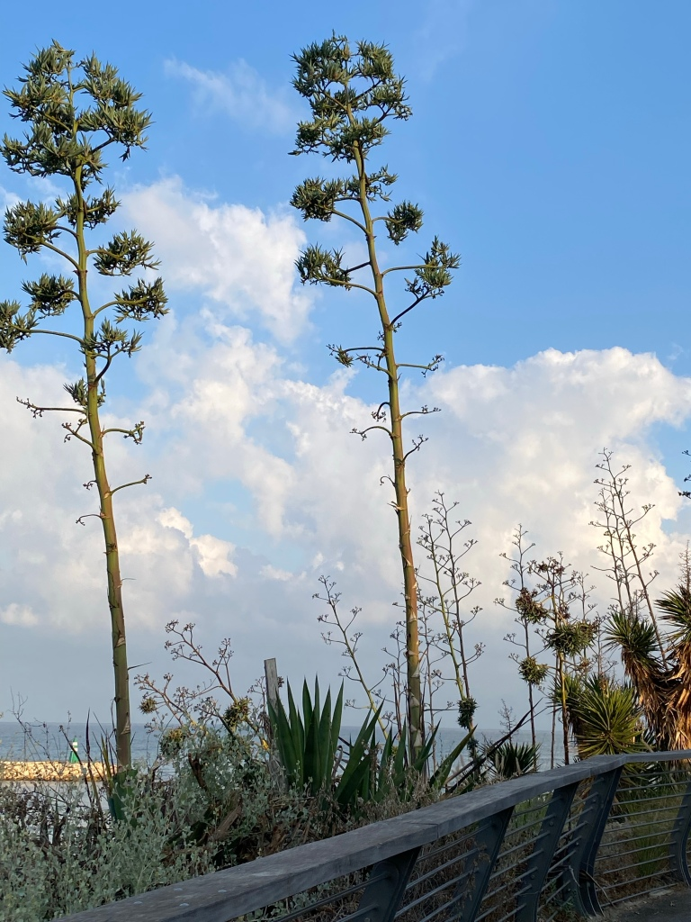 View of succulents and other plants with the sea in the background.